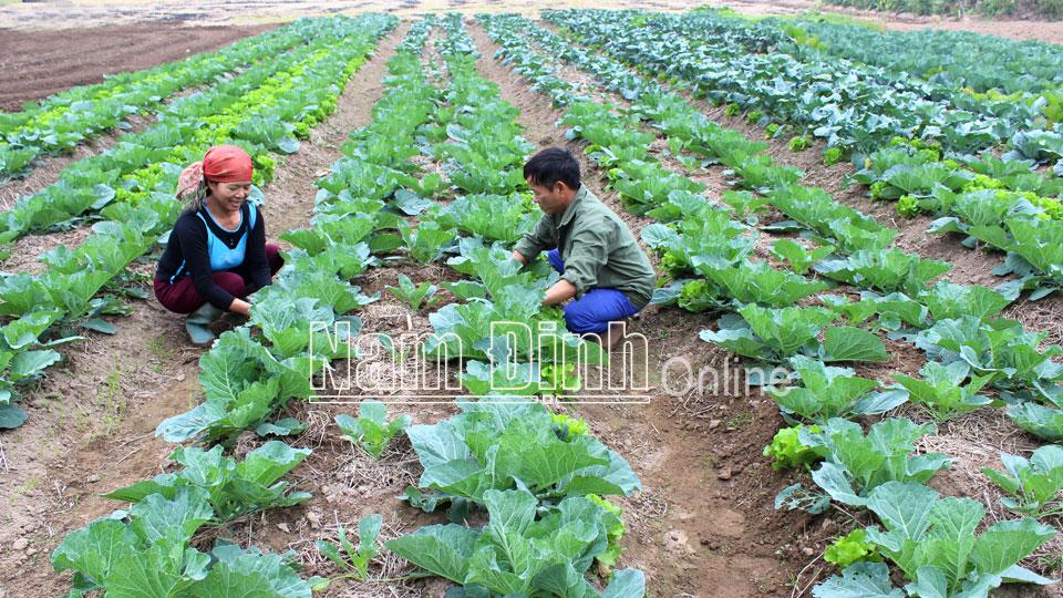 Ứng dụng khoa học kỹ thuật giúp gia tăng giá trị nông sản