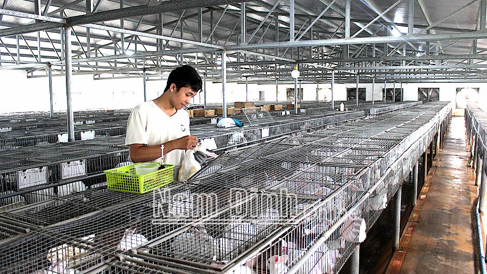Quyết liệt kiểm soát dịch bệnh động vật trên đàn vật nuôi
